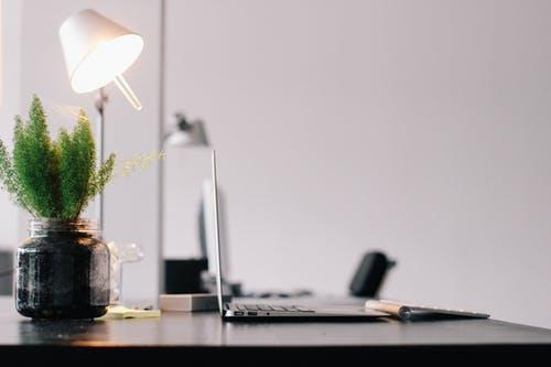 适合办公室的植物有哪些