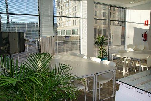 养哪些植物,办公室更有生机?